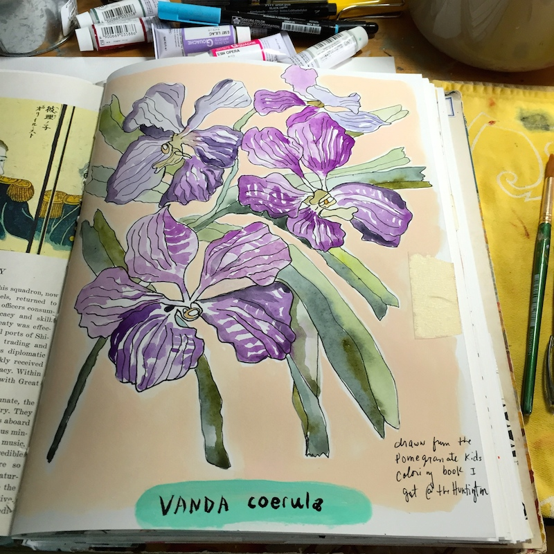 coloring book orchids